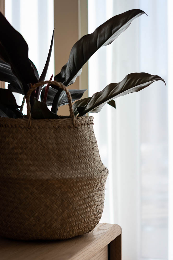 Plant in PREMIER SUITES Antwerp apartment